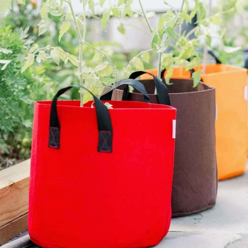 grow bags versus containers