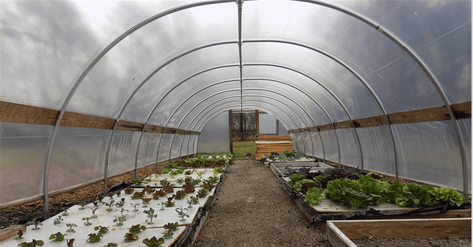 Upgrading a Hoop House Greenhouse