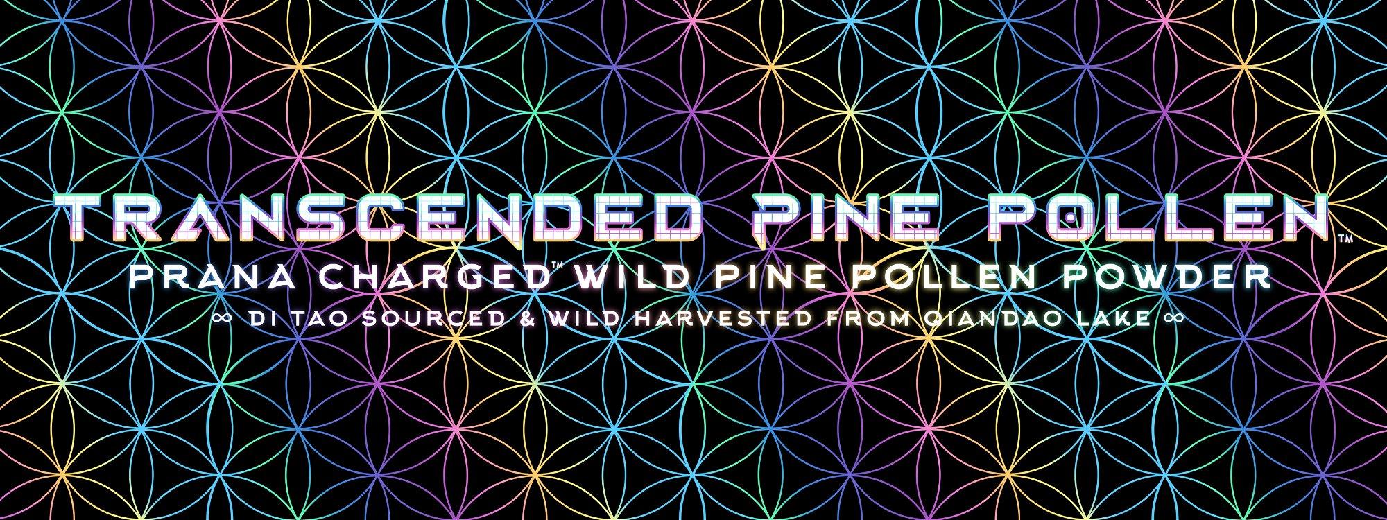 transcended pine pollen di tao sourced qiandao lake