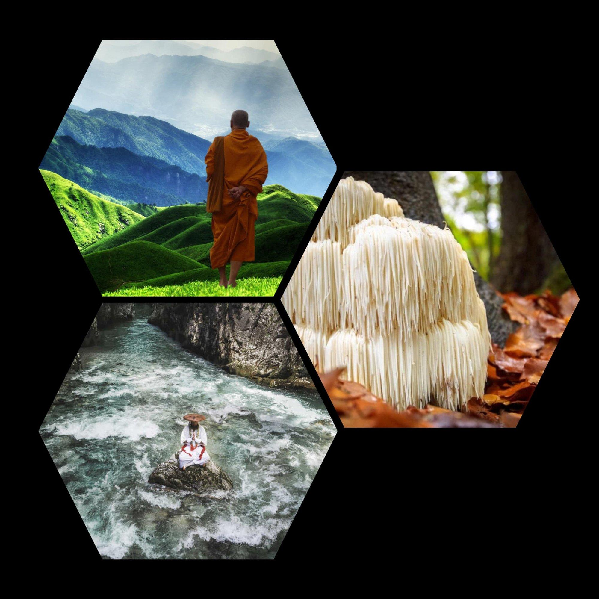 lions mane mushroom Buddhist monk