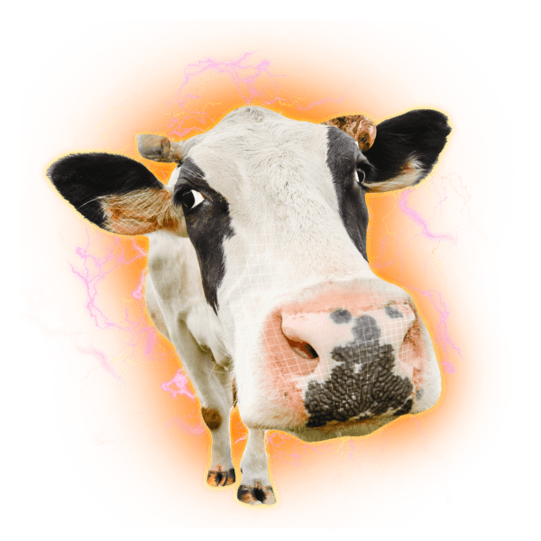 whey protein cow electric hologram