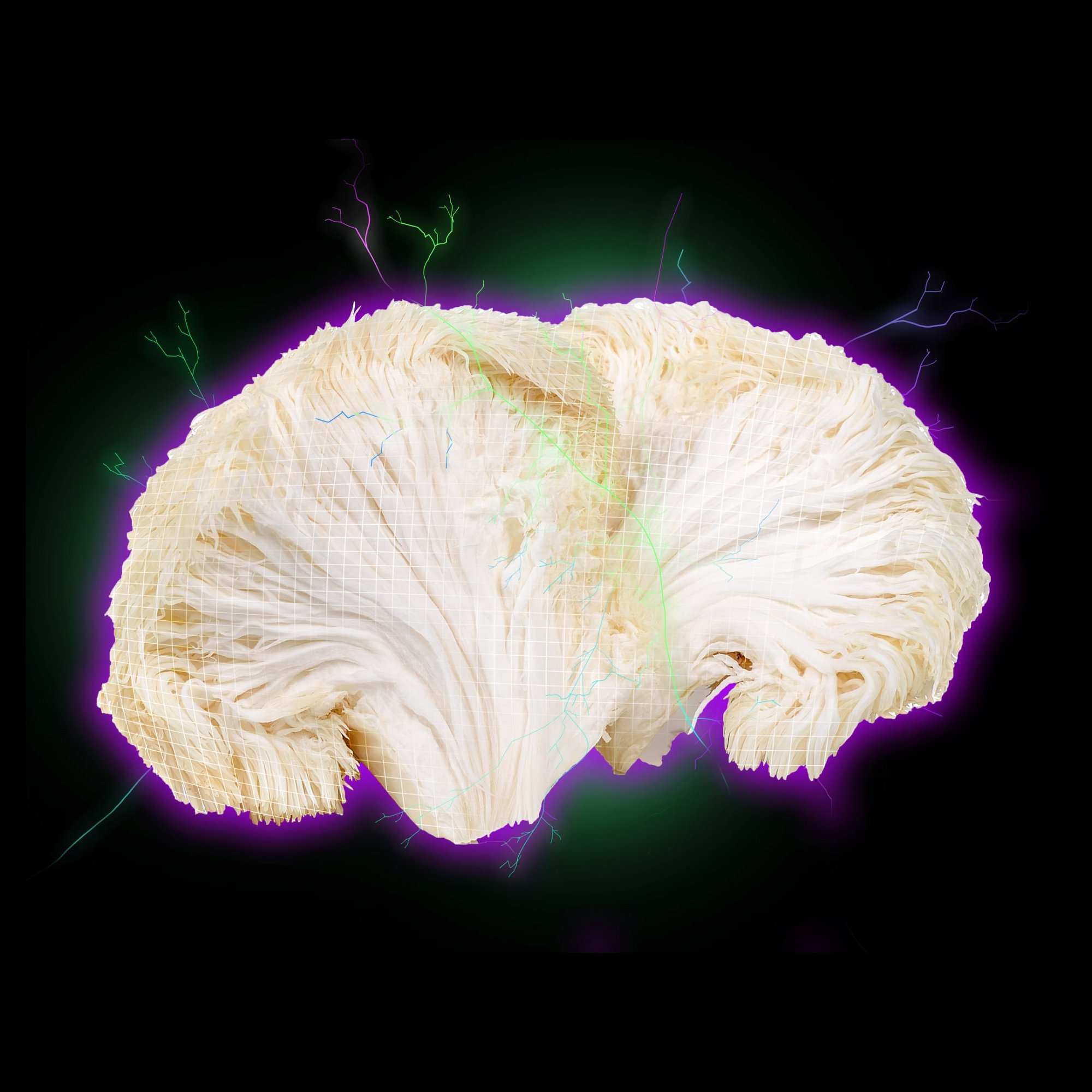lions mane extract di tao sourced