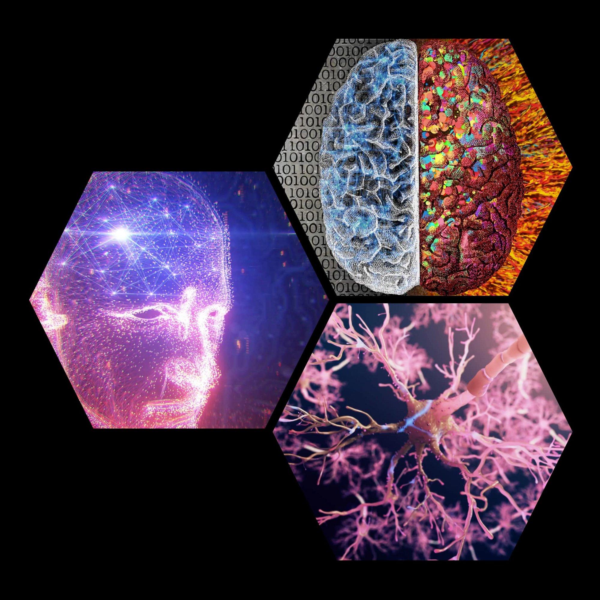 lion's mane nootropic mushroom brain booster neurone brain cells