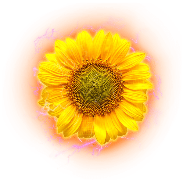 sunflower electric hologram