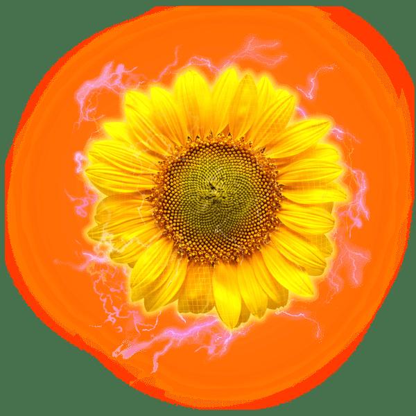 sunflower electric hologram