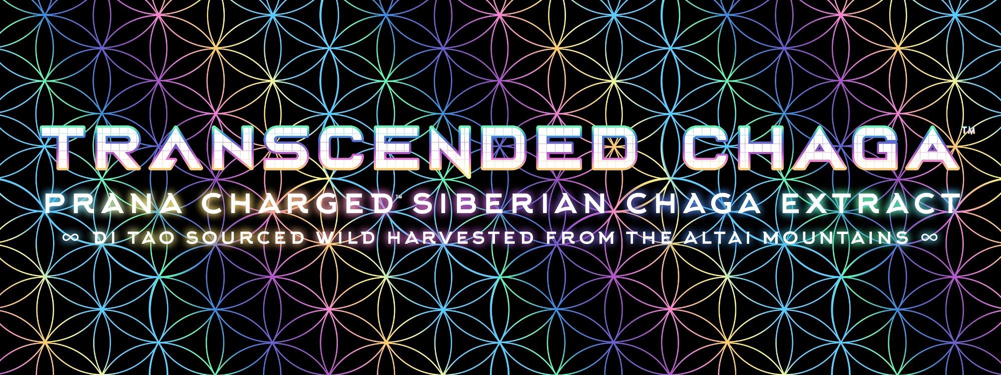 transcended siberian chaga extract
