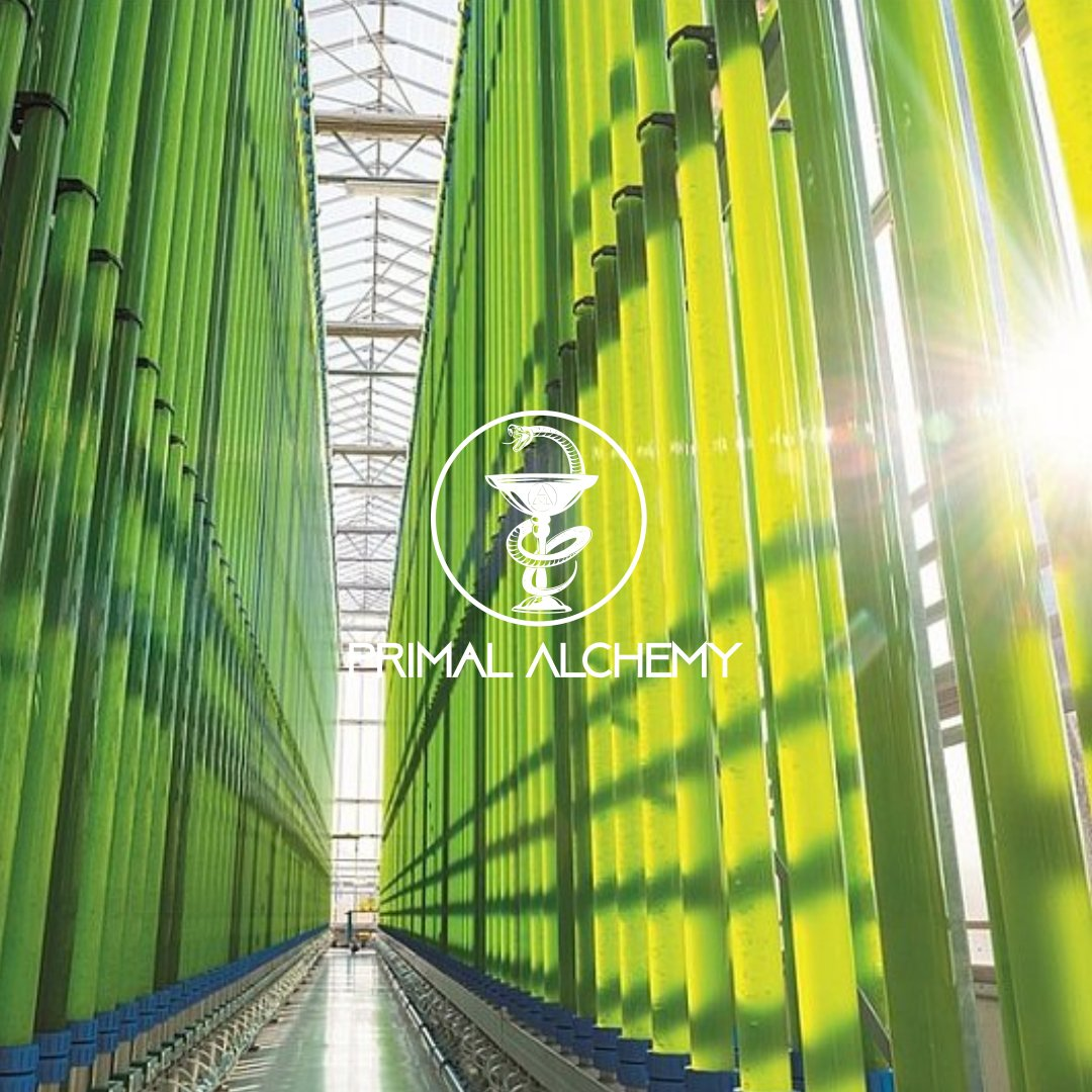 algae bioreactor primal alchemy