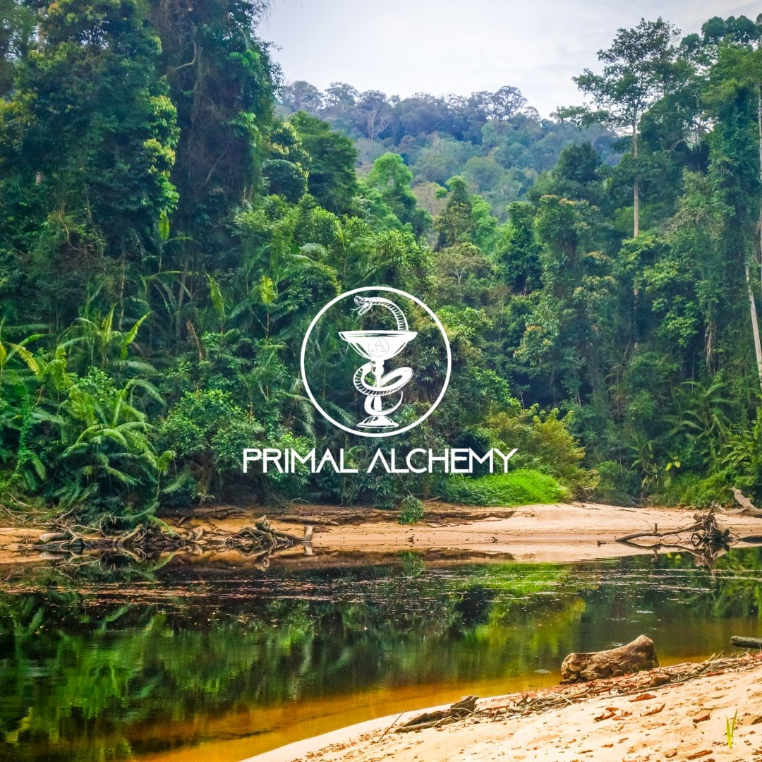 malaysia rainforest jungle primal alchemy
