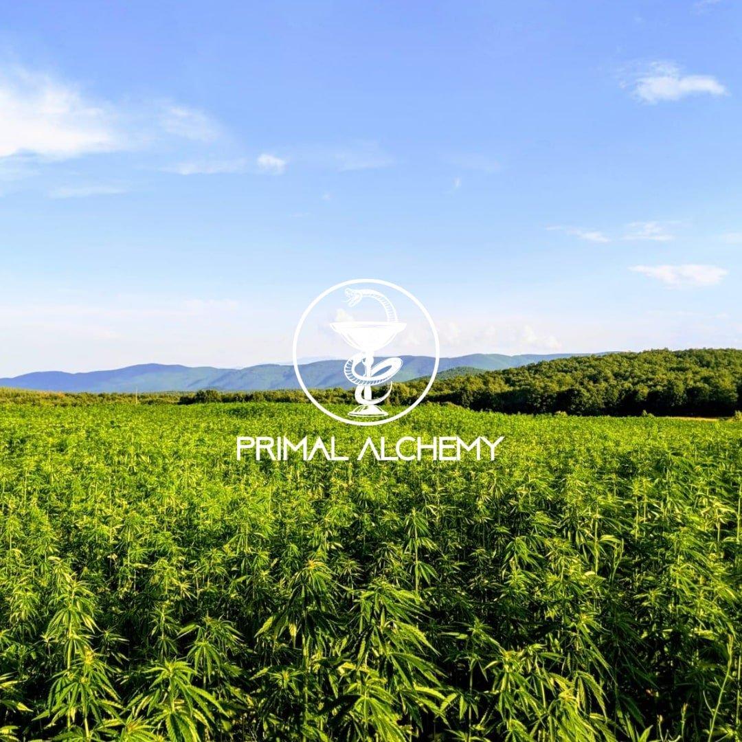 cannabis hemp farm bulgaria primal alchemy