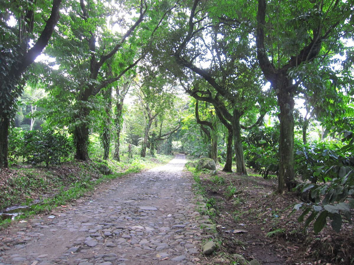 Road to the Finca