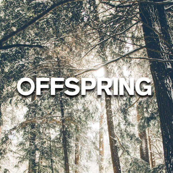 offspring winter sale 2018