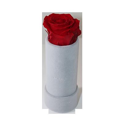 eternity_lasting_roses_forever