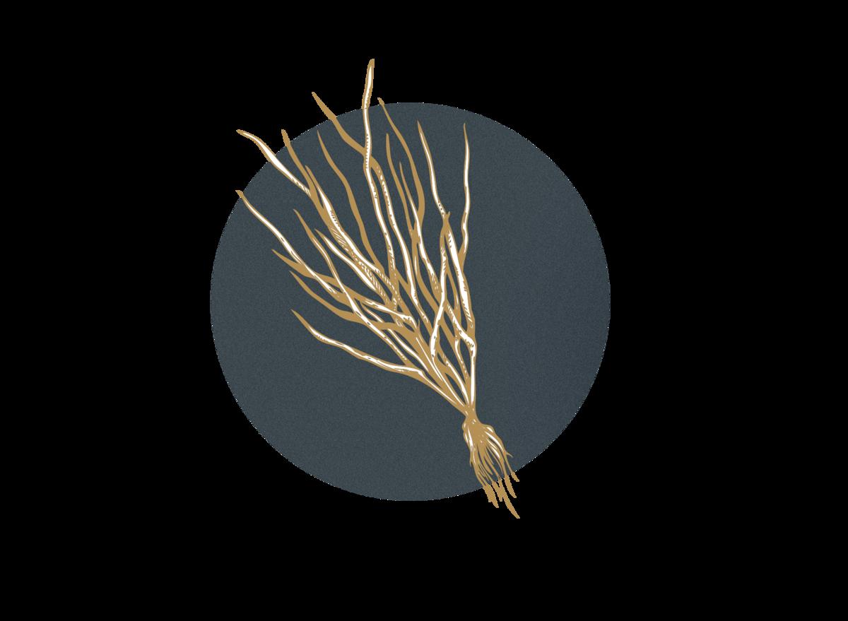 Vetiver (vetiver zizaniodes) AVOILA Nourishing Face Oil