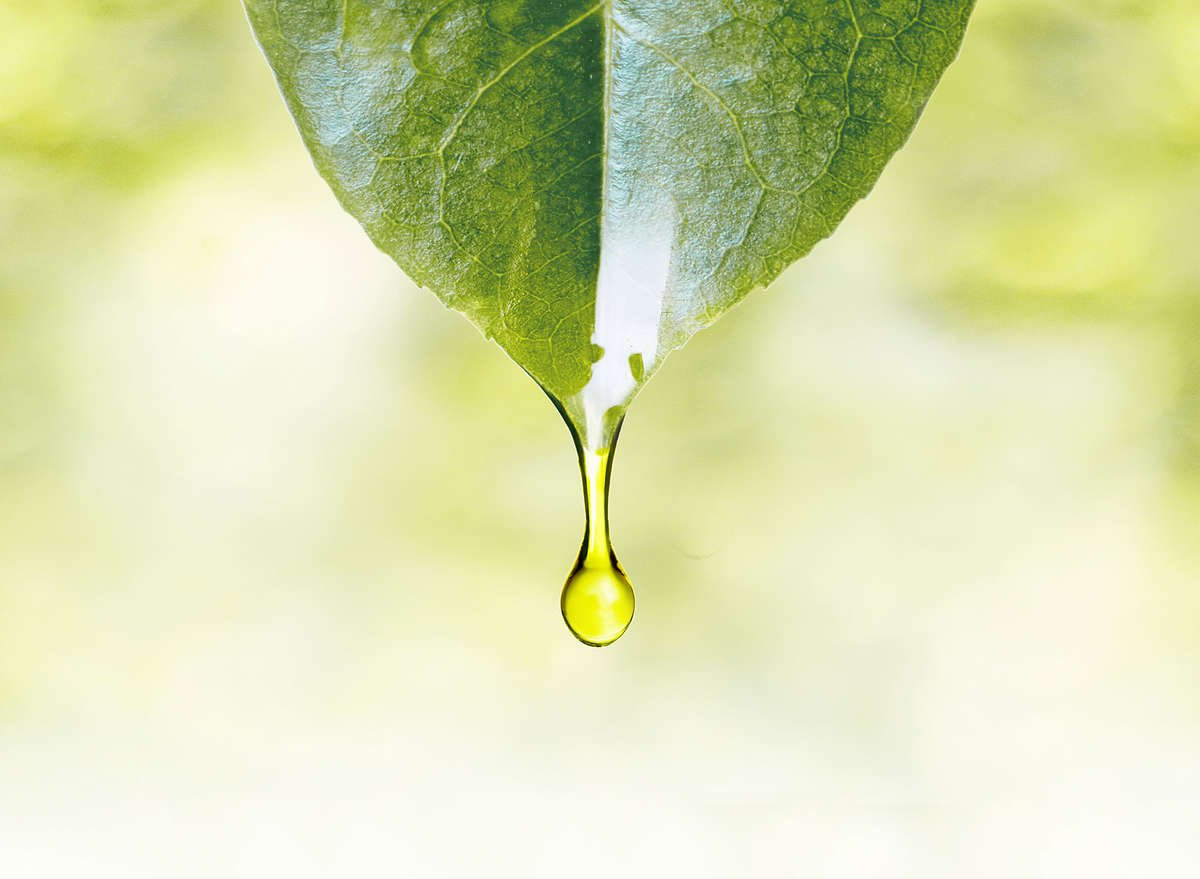 Closeup of oil droplet on leaf. Clean beauty. AVOILA