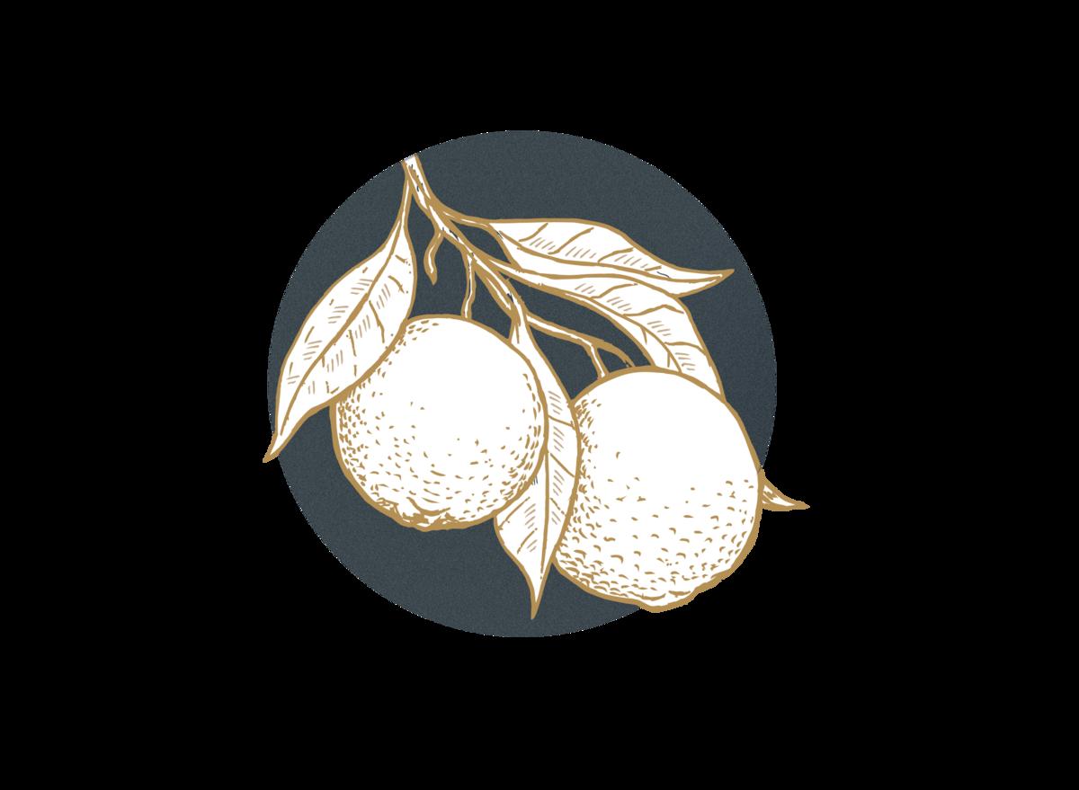 Grapefruit (citrus paradisi) AVOILA Nourishing Face Oil