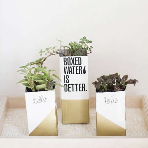 Boxed Water Succulents