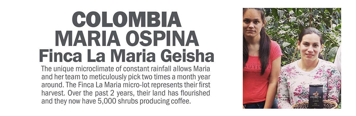 Colombia Geisha