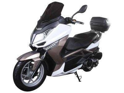 Ice Bear 300-T9 300cc Scooter Champagne/White
