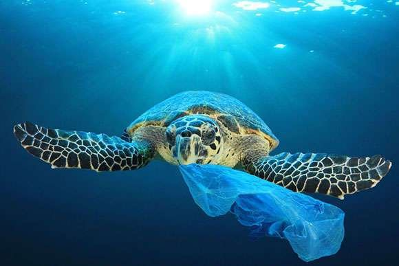 plastic harms our oceans, so we don't use any plastic packaging