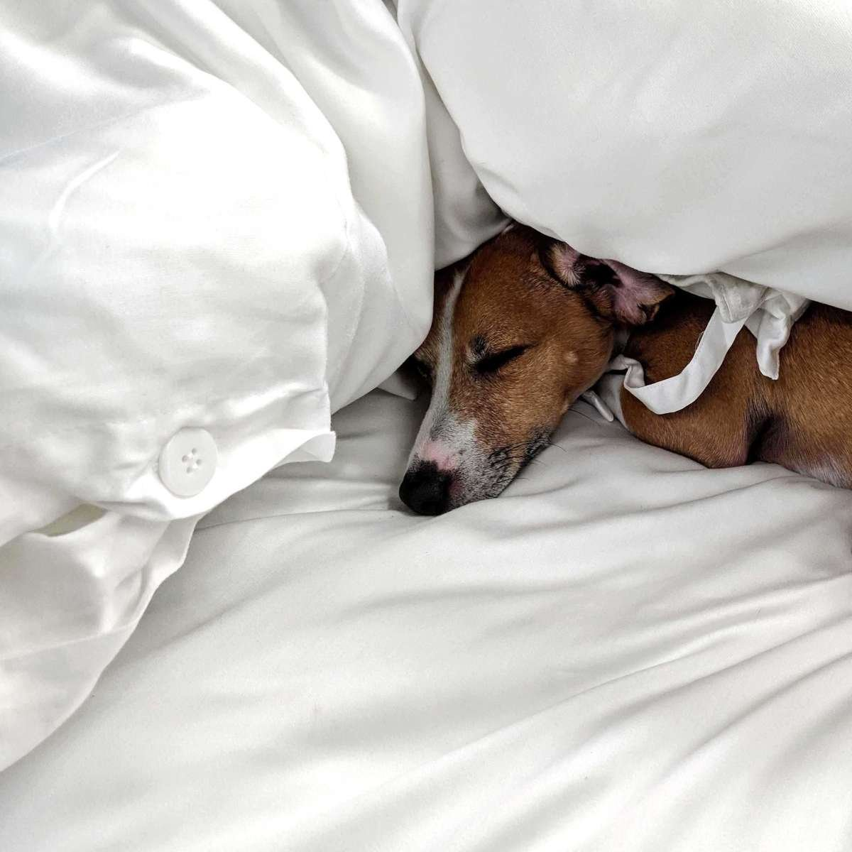 Sleep like a puppy in our Eucalyptus duvet covers
