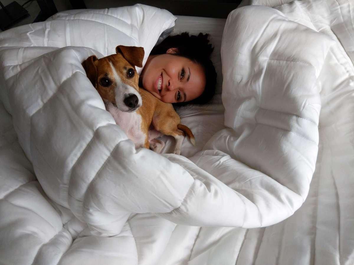 Sheets and Giggles Eucalyptus Comforters