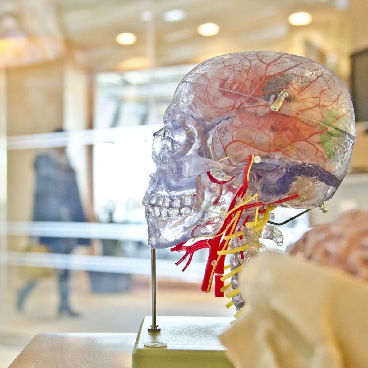 PEMF and epilepsy