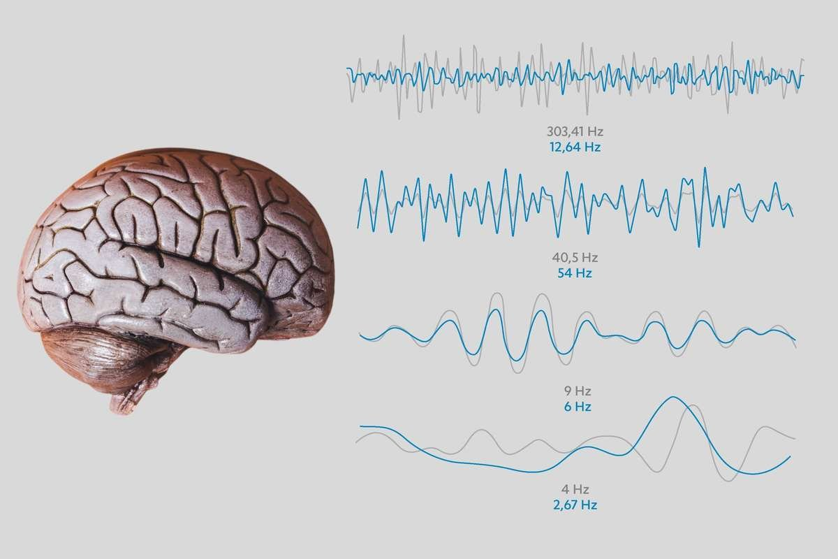 PEMF Frequencies and the Brain