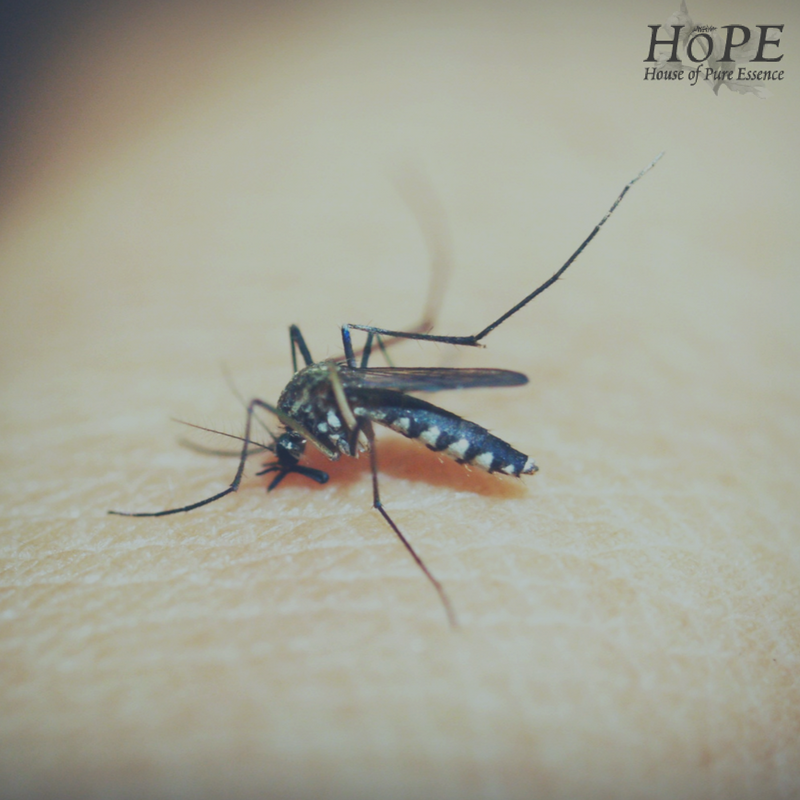 HoPE DIY Insect Repellent