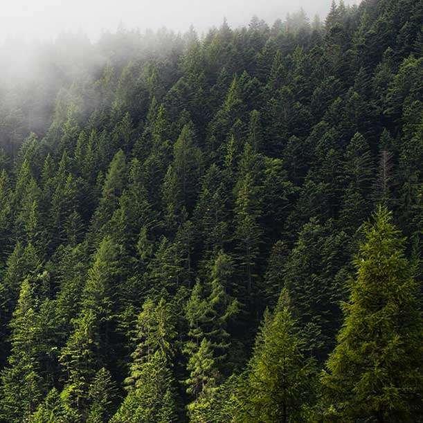 Pure Planet Tree-Free Impact
