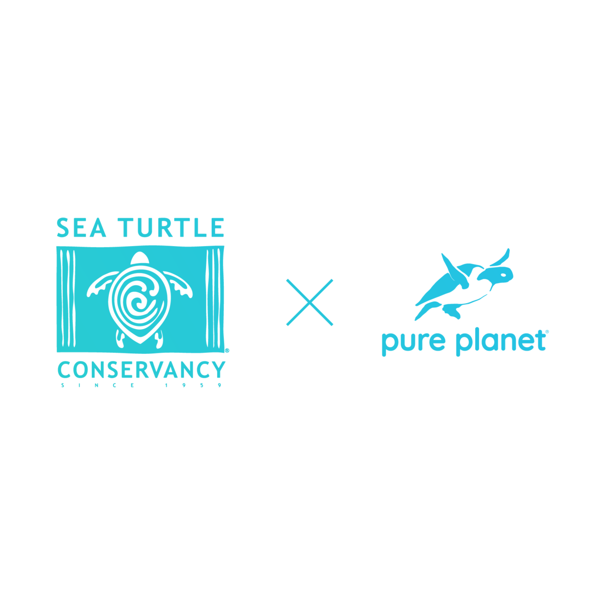 Pure Planet partnered with the Sea Turtles Conservancy