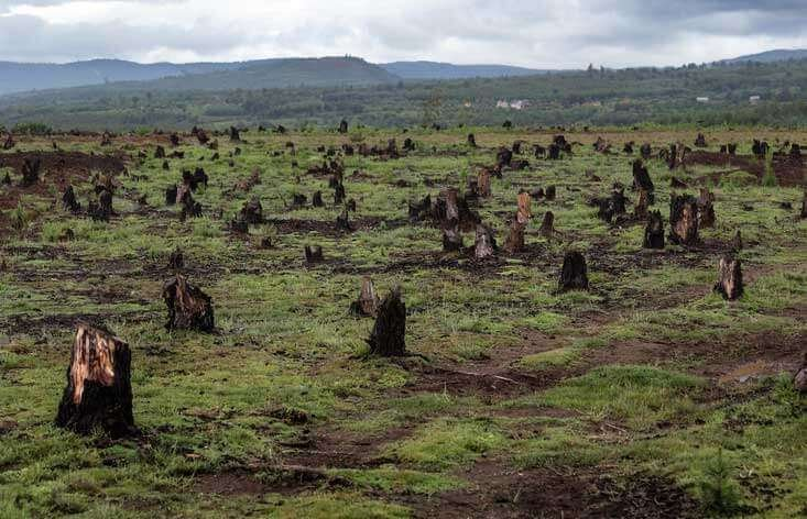 Deforestation caused by toilet paper