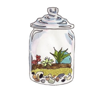 image of a completed terrarium