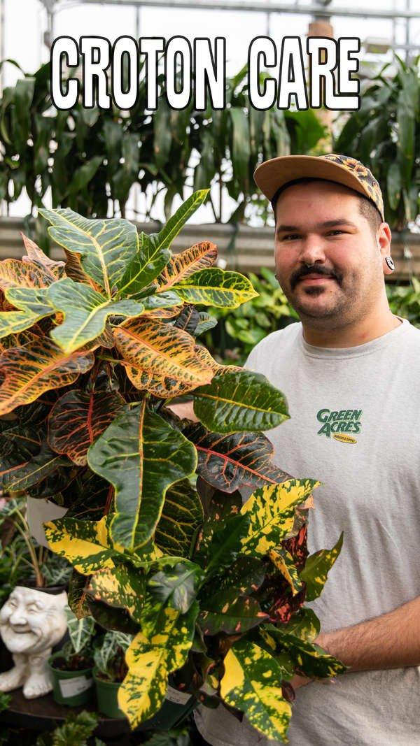 Marshall holding Croton Houseplant