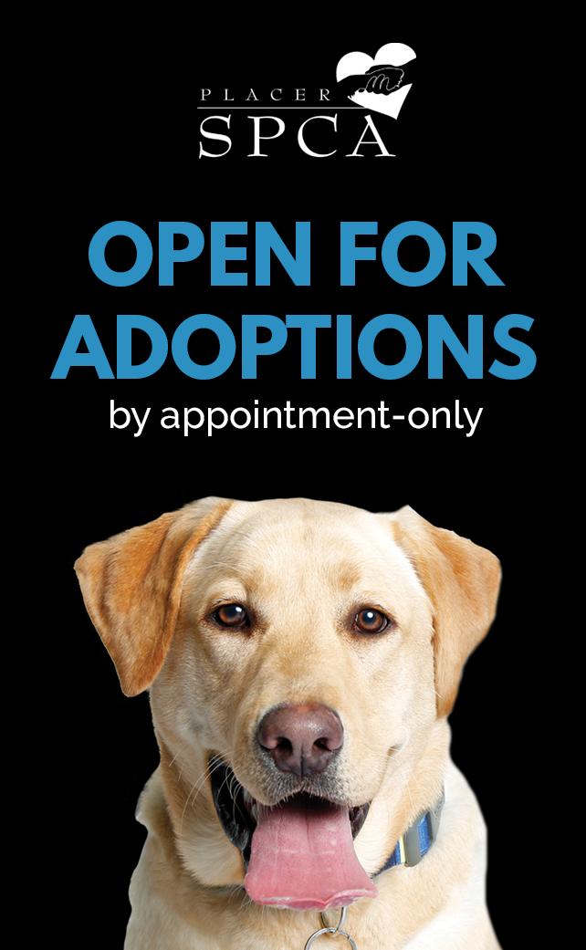 Placer SPCA adoptions logo