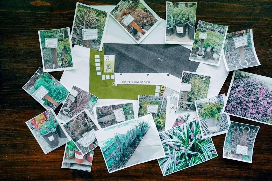 Studio Plumb plant images on table