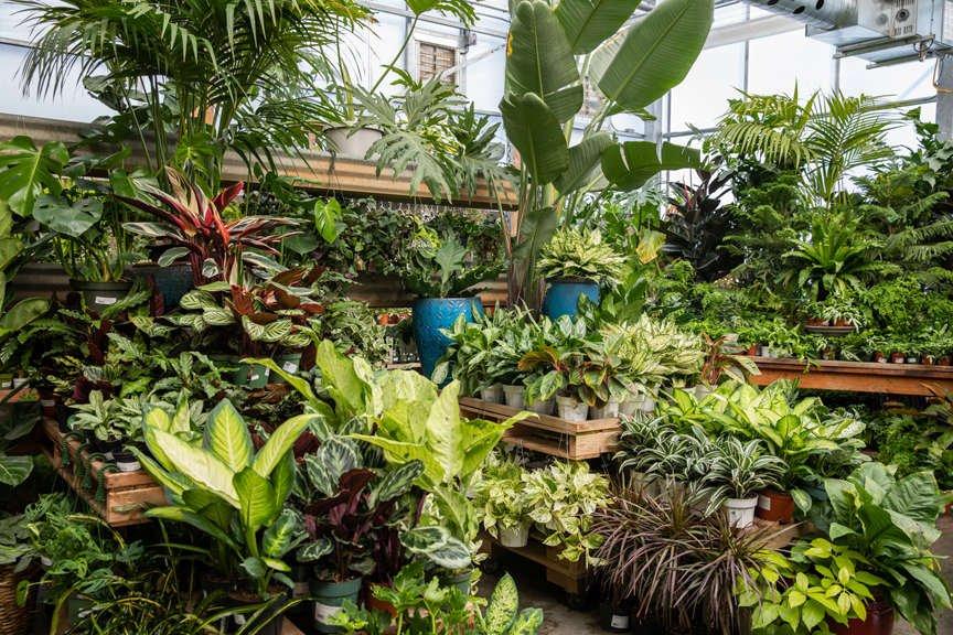 Houseplants at Green Acres Nursery & Supply