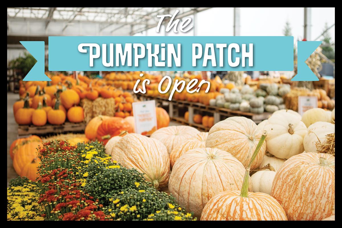 The Pumpkin Patch is Open!