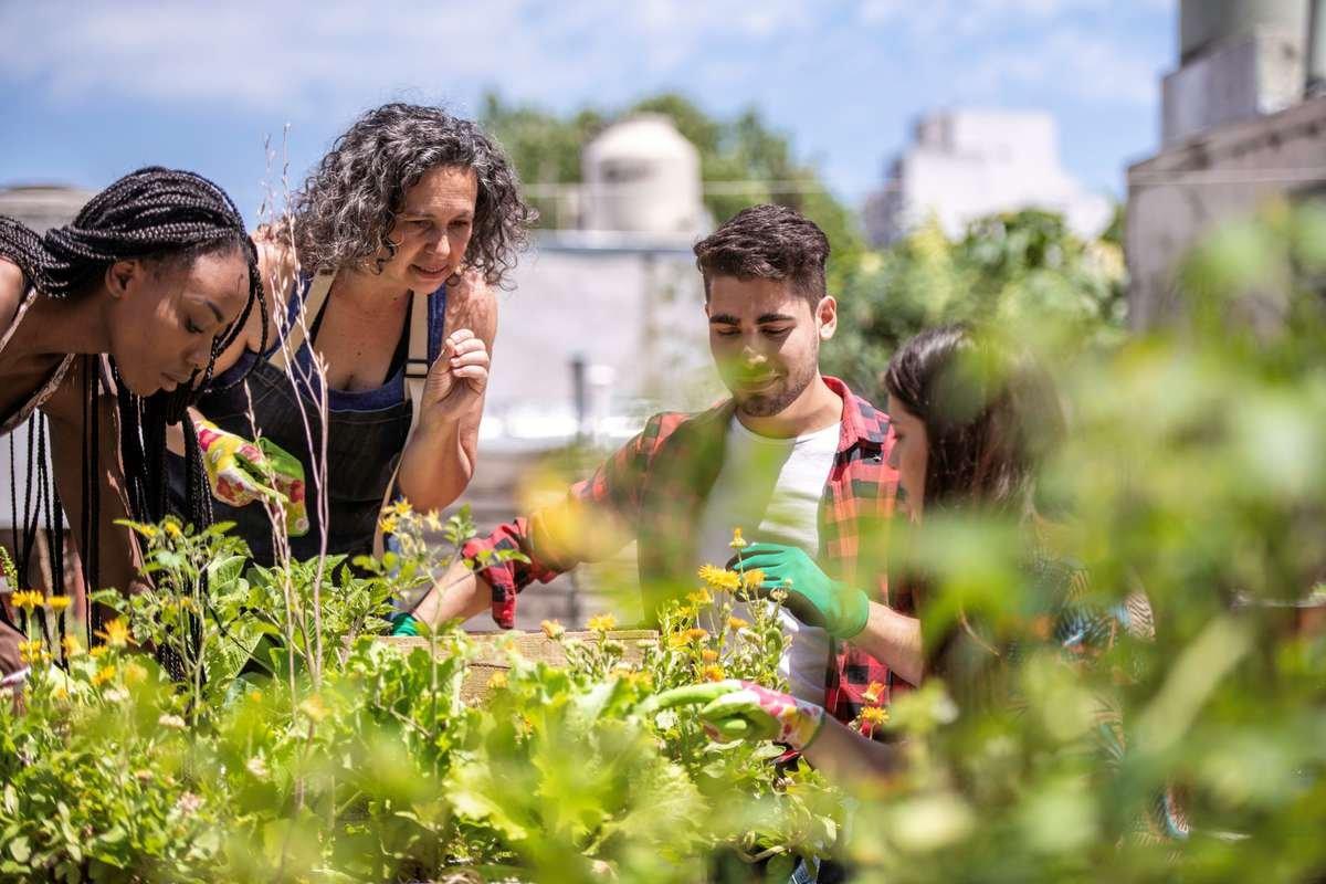 Garden Club Members Planting