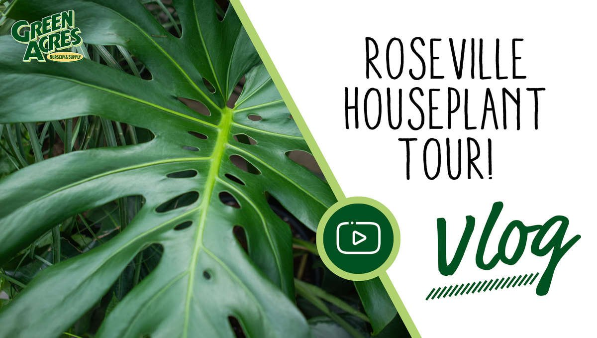 Link to Roseville Houseplant Tour Video