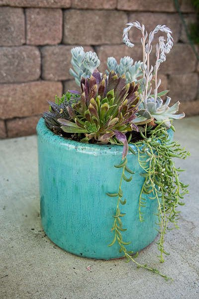 Aqua Pot with  Echiveria and String of Bananas