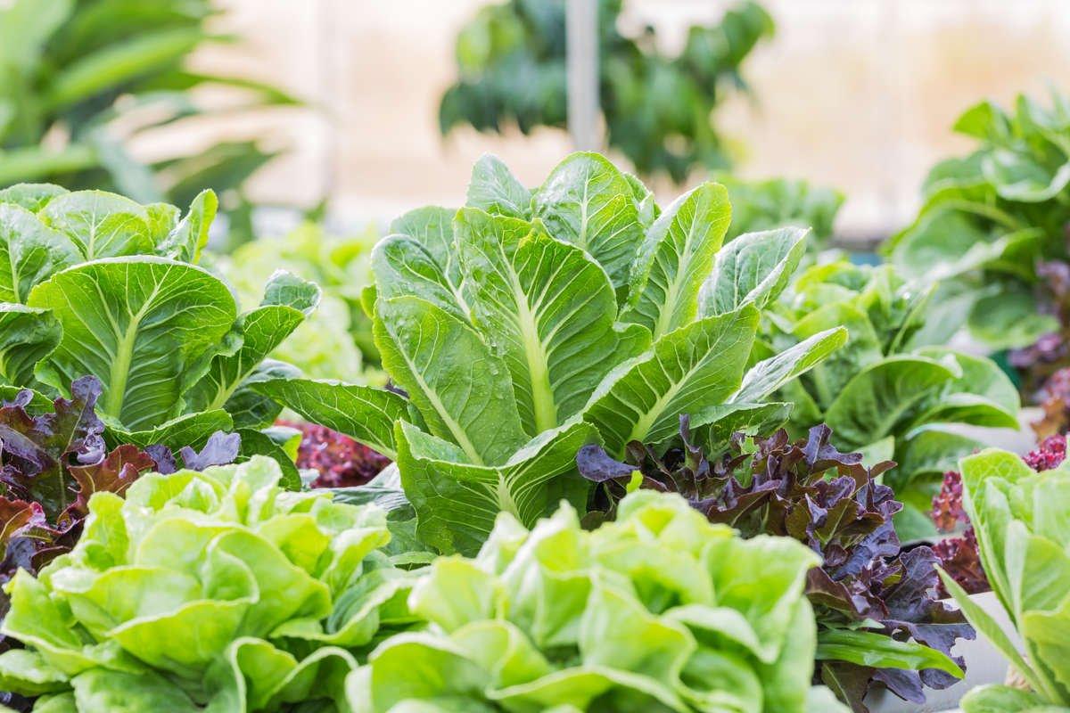 Winter Vegetable Garden
