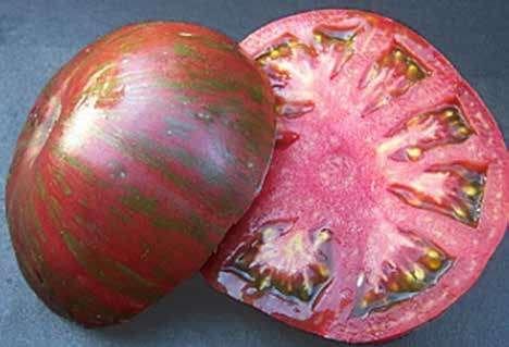 Wild Boar Tomato: Pink Berkeley Tie-Dye