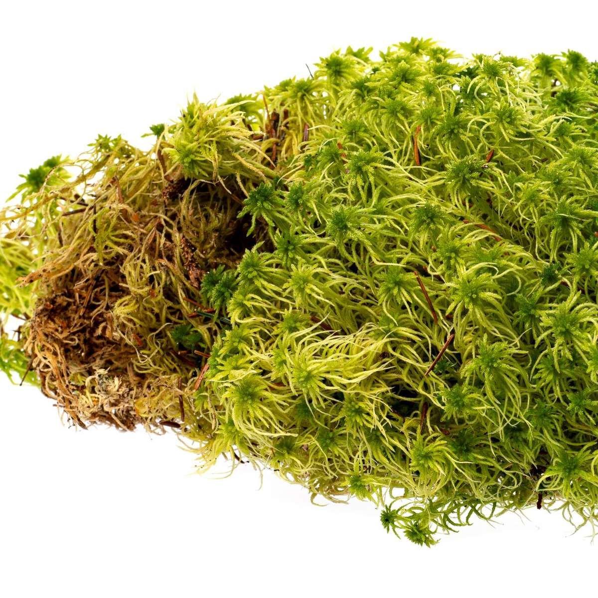 Fresh Peat Moss