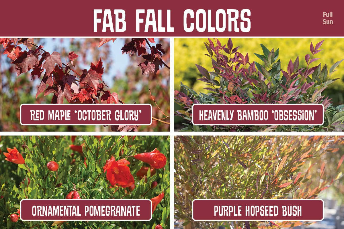 Fab Fall Colors graphic