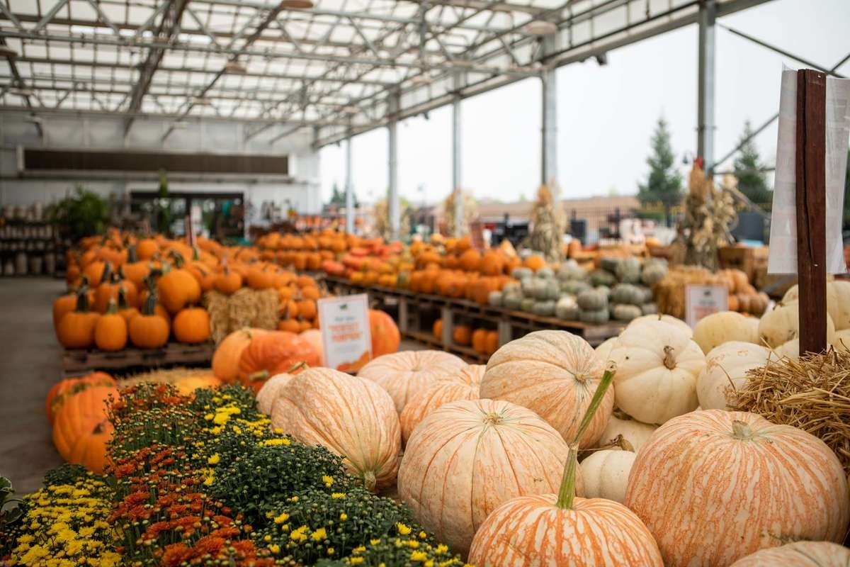 Pumpkin Patch at Rocklin Location
