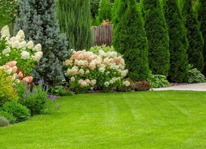 Lush healthy green lawn