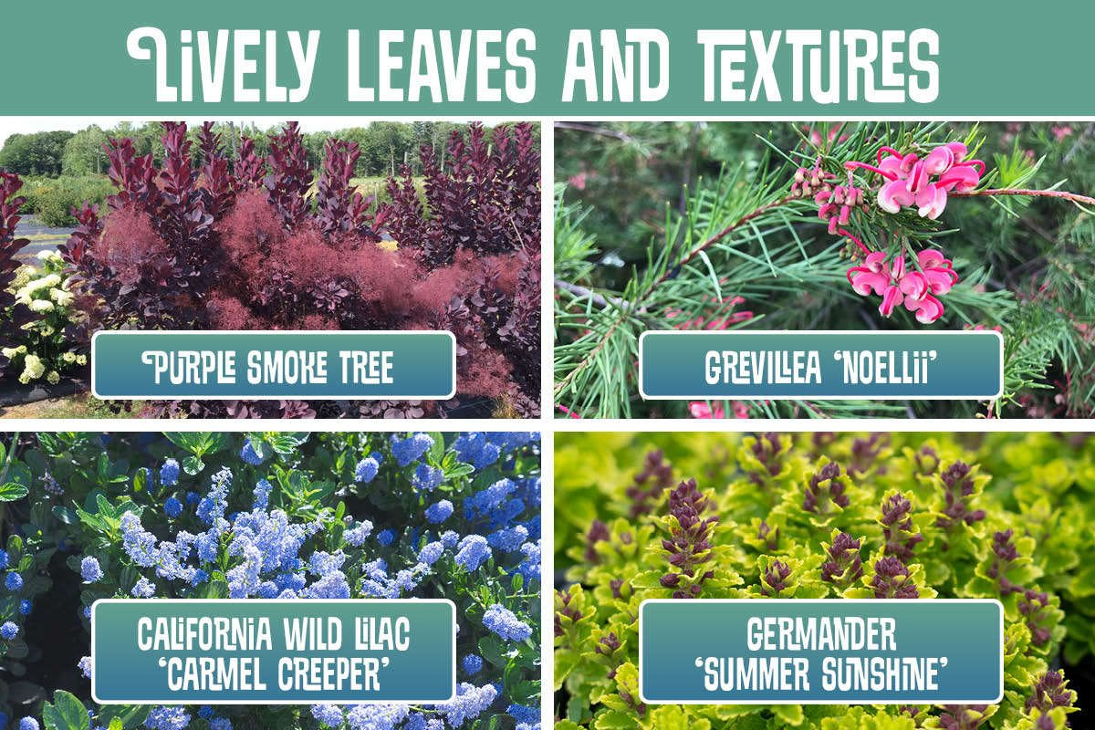 Lively Leaves and Textures graphic