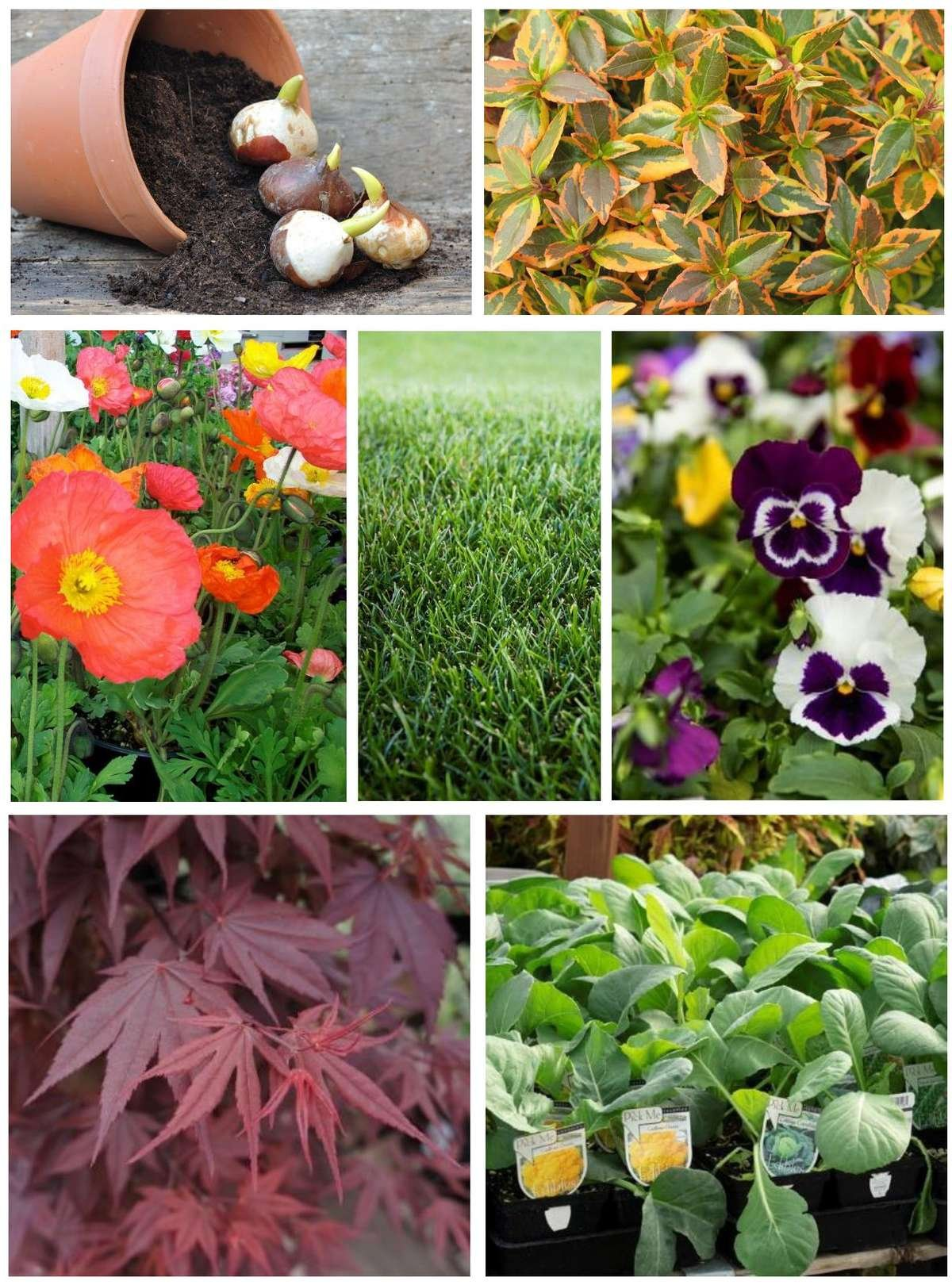 Collage of Fall Plants