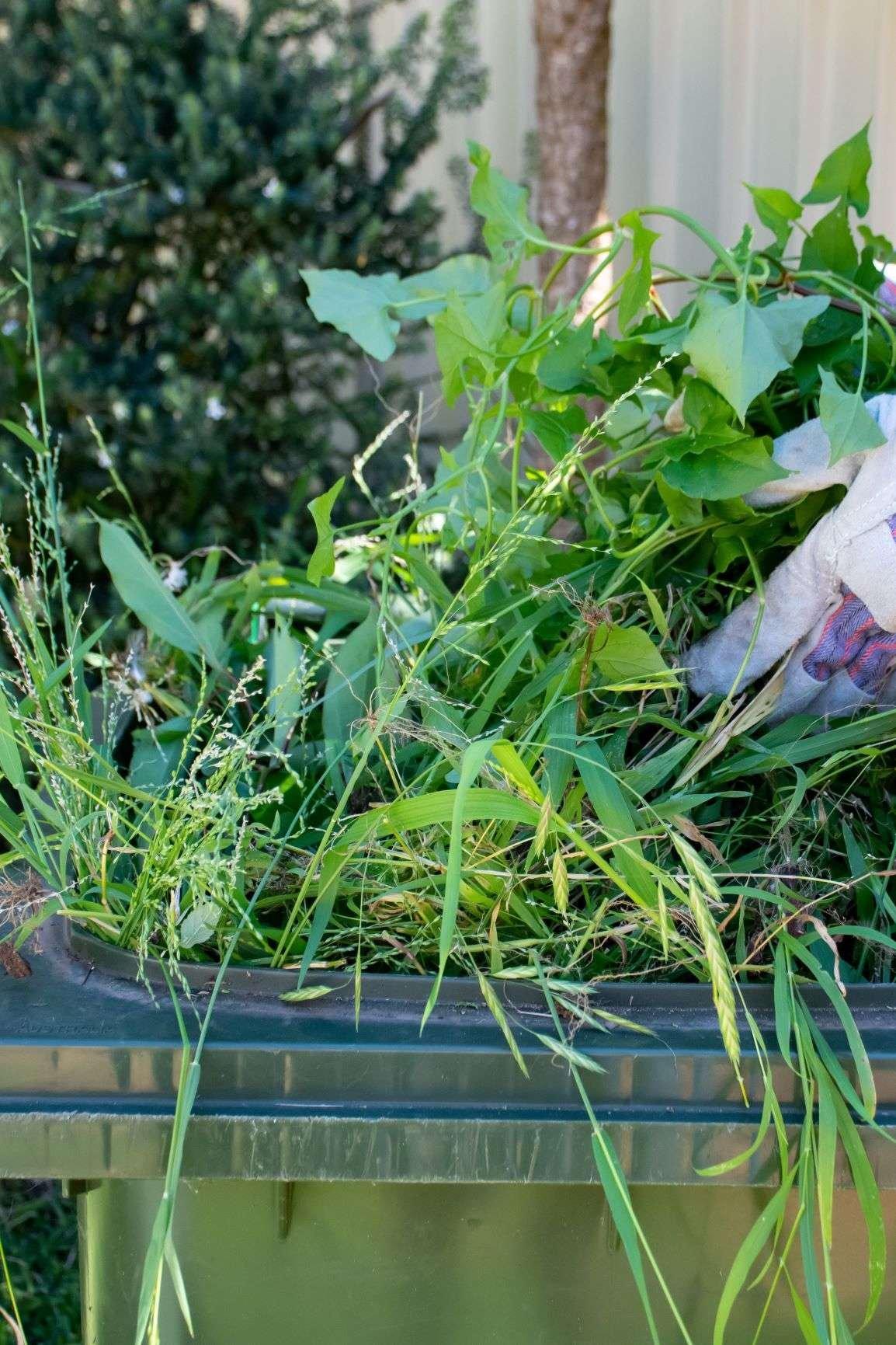 Garden Waste in Green Bin