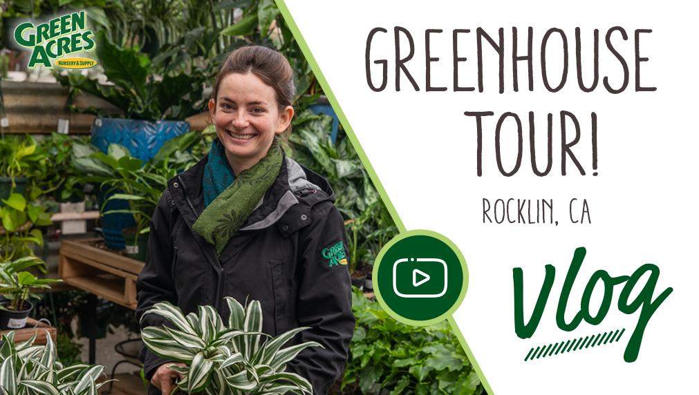 Link to Greenhouse Tour at Rocklin Green Acres Nursery & Supply